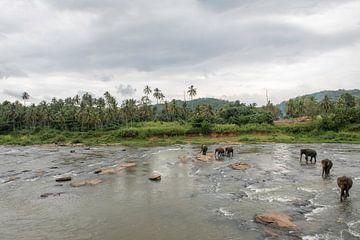Elephants of Sri Laka von Roland de Zeeuw fotografie