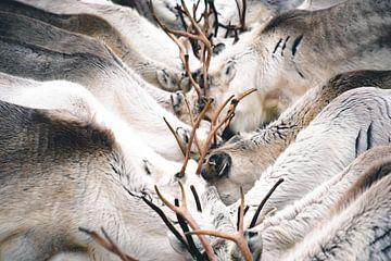 Rendieren van Kimberley Jekel
