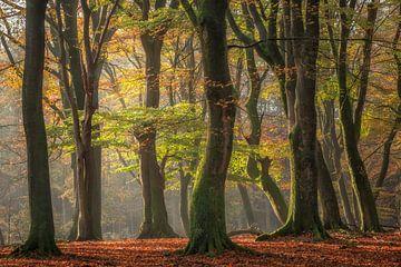 Beukenbos op een zonnige herfst ochtend van Dennis Mulder