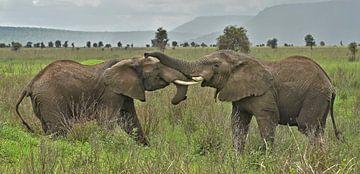 Twee verliefde olifanten van Esther van der Linden