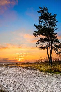 Einsamer Baum am Ostseestrand von Günter Albers