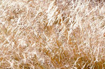 Gouden Veld Zacht Wind van Nicole Schyns