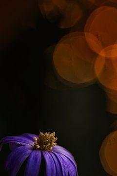 Anemone auf kreative Art und Weise von Lindy Schenk-Smit