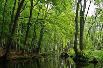 groene hel - Mecklenburg van Steffi Hommel