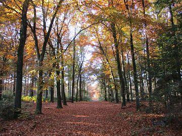 Herfst van richard de bruyn
