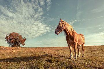 Einsame Pferd von Sergej Nickel
