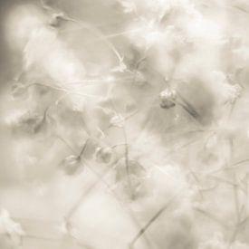Impressie van gipskruid van Cathy Roels