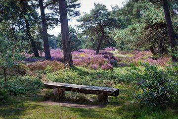 Bank an einem idyllischen Platz mit blühendem Heidekraut auf der Veluwe von Peter de Kievith Fotografie