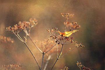 Ein bisschen Herbst  von Els Fonteine