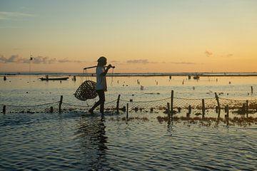 Zeewier boer in Nusa Lembongan met zonsondergang