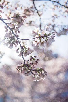 Japanse sierkers in wit van Patrick Verheij