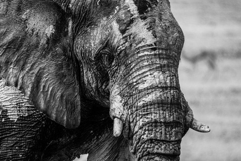 Afrikanischer Elefant sur Franky Yellow