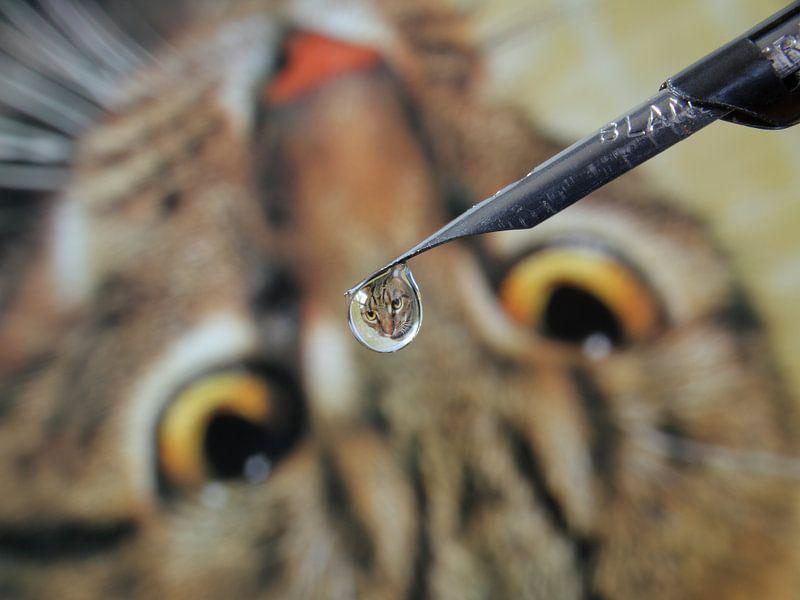 Waterdruppel met reflectie van kat van Inge van den Brande