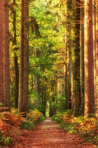 Herfst in het Vijlenerbos in Zuid-Limburg van John Kreukniet