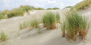 Strand van Terschelling van Dirk van Egmond