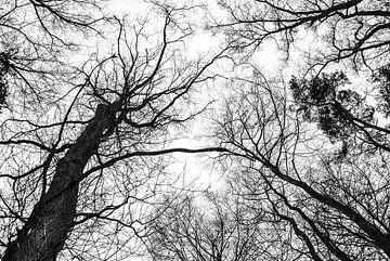 Zwart wit beeld van bomen van Tess Smethurst-Oostvogel