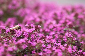 Bij op paarse bloemen van Ruud Wijnands
