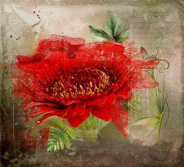 Rode bloem van Carla van Zomeren
