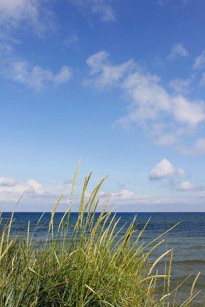 Dunes von Ostsee Bilder