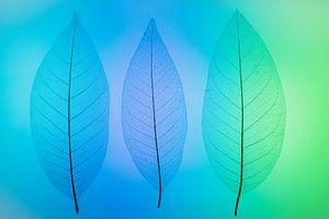 Skeletbladeren blauw, groen