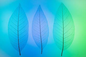 Skeletbladeren blauw, groen von Karin Tebes