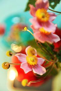 Japanse anemoon: een droom van