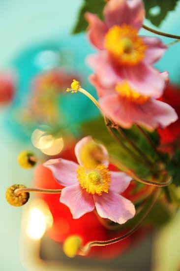 Japanse anemoon: een droom van Mariska van Vondelen
