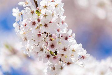 Bloesemboom met bloemen in volle bloei van Evelien Oerlemans