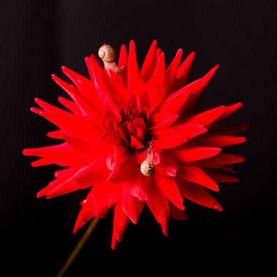 Muurbloemen / Wallflowers van Coby Zwartbol