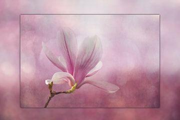 Magnolienblüte  mit Rahmeneffekt von Ursula Di Chito