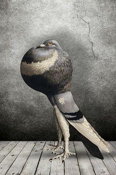 Show Pigeon von Marja van den Hurk