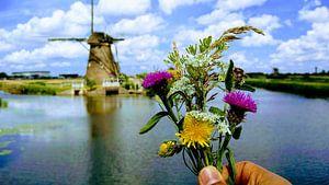 Kinderdijk Postcard