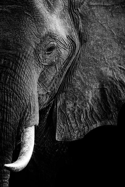Olifantportret in zwart-wit van Heleen van de Ven