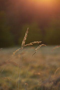 Landschapsfoto van Mascha Boot