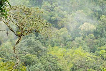 Nebelwald Ecuador #2 von Hanneke Bantje