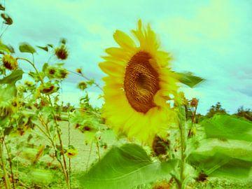 Sonnenblumen im Wind 1 van
