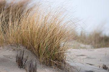 In de duinen van Emi Barendse