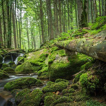 Bos en Beieren  van Tobias Luxberg