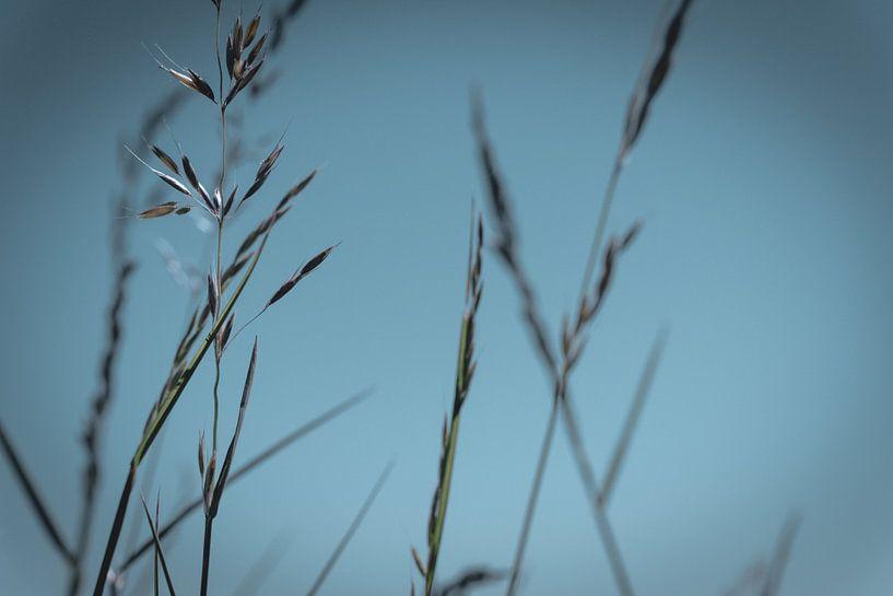 Gras sprieten van Jadey Smit