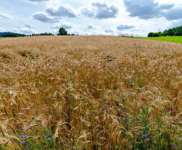 Planet Weizen von Leopold Brix