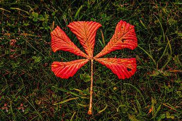 Herbstlandschaft von Johnny Flash