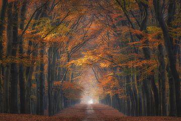 Herbstallee von Arjen Noord
