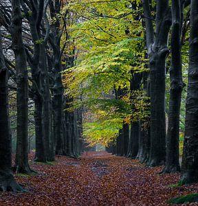Regen in het bos. van