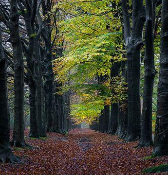 Regen in het bos. van Jaap Jan Bakker