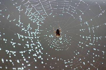 Spider House van Erwin Delsman