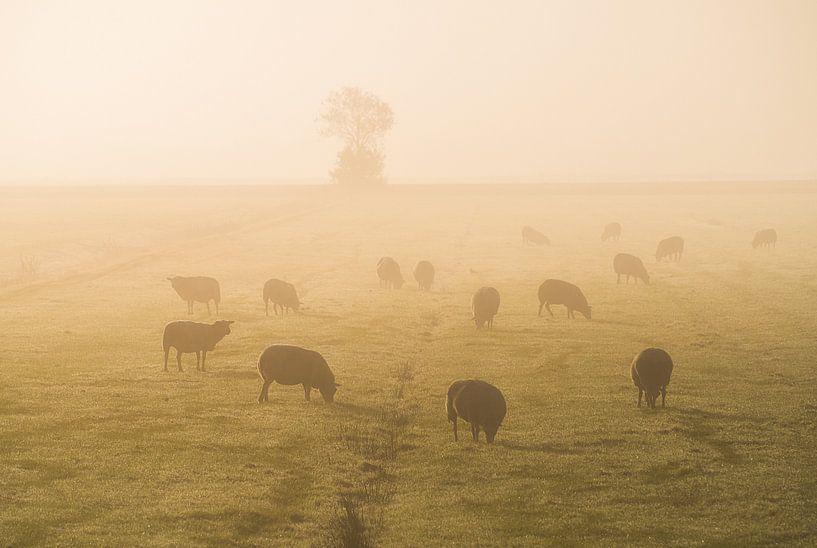Schapen in de mist van Roelof Nijholt