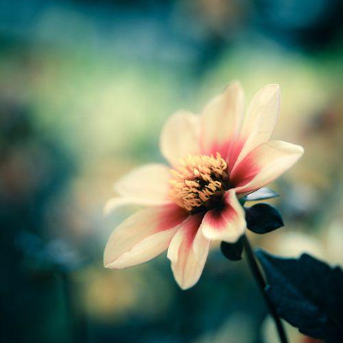 flower von Freddy Hoevers