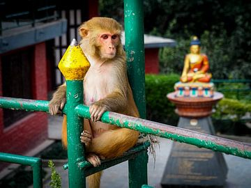 De koningin en koningin van de Monkey Temple in Kathmandu Nepal van Rik Pijnenburg