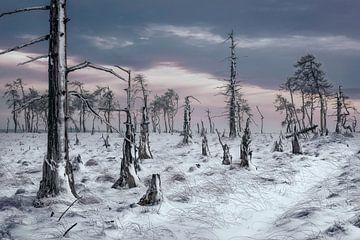Verbrande bos van Peter Poppe