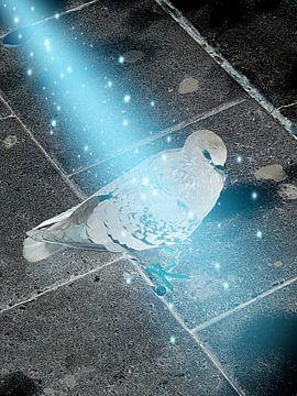 Bijzondere duif van Renee Alexandra Serlier